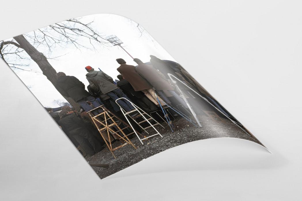 Fans auf der Leiter (2) als FineArt-Print