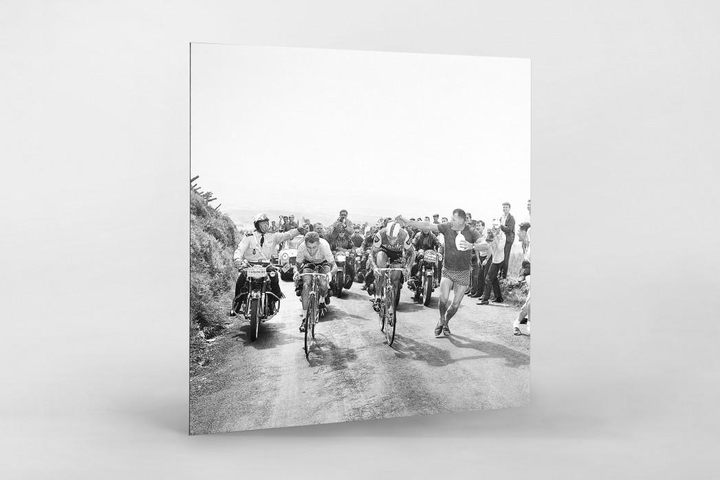 Mit dem Schwamm bei der Tour 1964 als auf Alu-Dibond kaschierter Fotoabzug