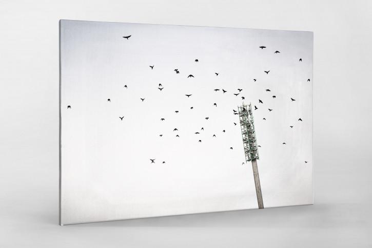 Vogelschwarm im Flutlichtmast im Wildparkstadion