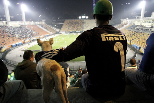 Palmeiras Fan And Dog Watching The Match - Gabriel Uchida - 11FREUNDE BILDERWELT