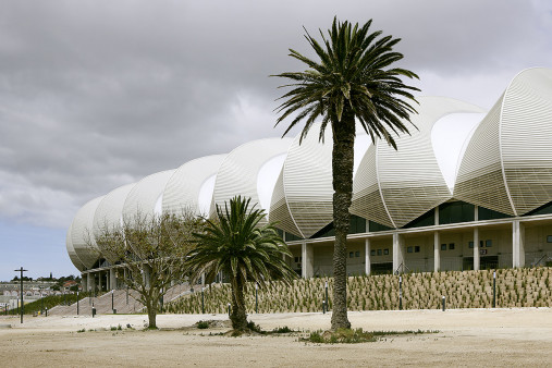 Palmen in Port Elizabeth