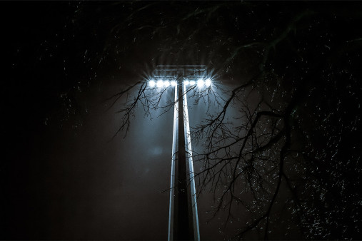 Flutlich durch die Bäume - Sebatian Wells - 11FREUNDE SHOP